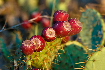 Cacti and biomimicry